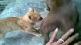 dog & cat (meo va cho) - mr. jacky liem