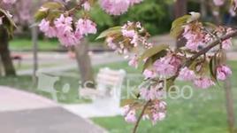 hoa khoe sac ( khoanh khac cua cuoc song ) - nguyen quoc ngoc