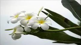 hoa su nha nang - truong vu