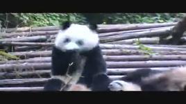 panda sneezing - dang cap nhat