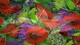 nhuy hoa trong gio - chau hoa kien (wakin chau)