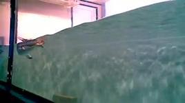 chim canh cut - dang cap nhat