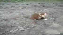 con chuot hamster nguy hiem - dang cap nhat