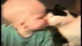 funny cats - dang cap nhat