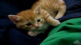 kitten gets sleepy while playing - v.a