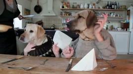 2 dog eat dinner - v.a