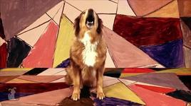 somebody that i used to know (dog & cat version) - gotye dog parody