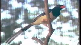 chim bay - yen nhi