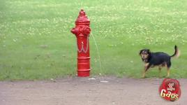 just for laughs gags - doggy prank_ peeing fire hydrant - v.a