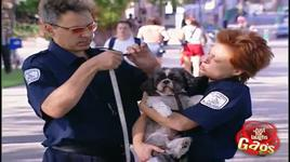 just for laughs gags - dog police - vol 5 - v.a