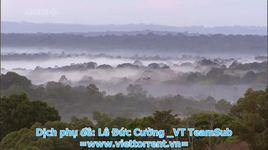 cuoc tan cong cua loai kien (bbc natural world ant attack) - v.a