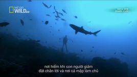 national geographic - shark eden (vietsub) - v.a