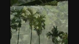 mimosa (kara) - giao linh