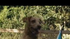 funny dogs cuc cute de thuong vo doi - v.a