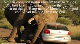 top 10 loai dong vat nguy hiem nhat tren the gioi - v.a