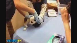 phan ung cua dong vat khi bi quay ray - v.a