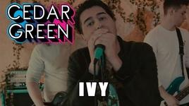 ivy - cedar green