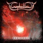 resilience - trophallaxy