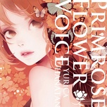 primrose flower voice - hanatan