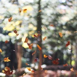 autumn images - v.a