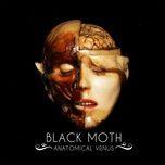 anatomical venus - black moth