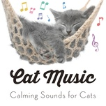 cat music - calming sounds for cats - cat music, pet care club, relaxmycat