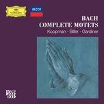 bach 333: complete motets - v.a