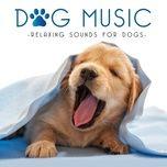 dog music - calming songs for dogs - dog music, dog music experience, dog music library, music for dog's ears