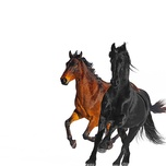 old town road (remix) (single) - lil nas x, billy ray cyrus