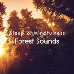 Forest Sleep and Relaxing Sounds, Pt. 246
