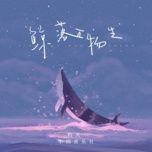 Tải bài hát Kình Lạc Vạn Vật Sinh / 鲸落万物生 Mp3